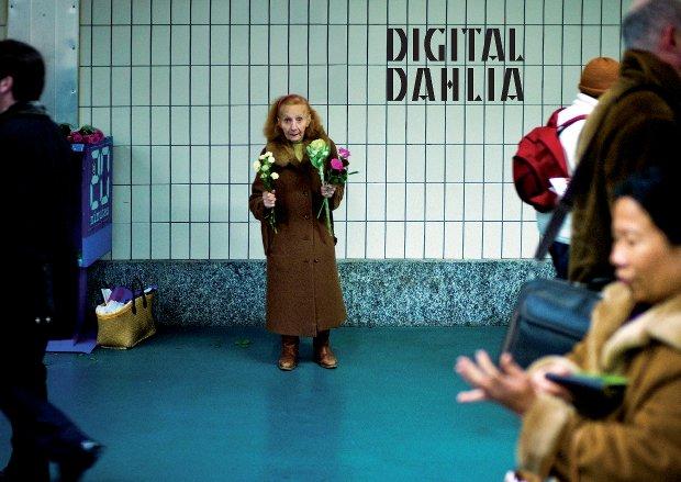 Digital Dahlia
